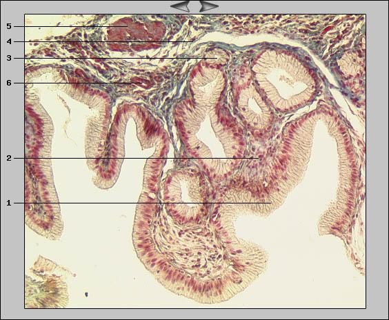 Anatomie Köln