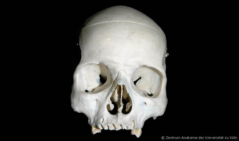 Anatomie des Menschen - Ein Internetatlas der Universität zu Köln
